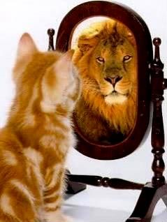 attitude_cat_lion_mirror-11