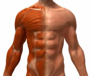 muscle-guy-300x249
