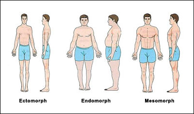 somatotype-body-types