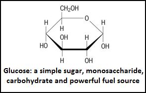 glucose-border