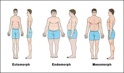 somatotype-body-types