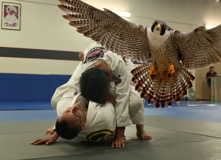 The New Improved Closed Guard: 'Falcon Guard' Will Surprise Your Opponents